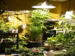 growroom2