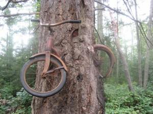 vashonbiketree2big