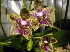 orchidworldjoe