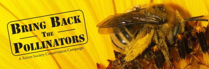 Bring back pollinators